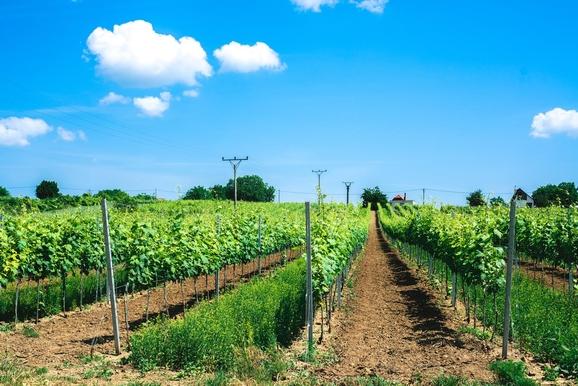 vinarstvo-berta-vinohrady
