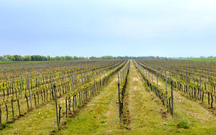 vinárstvo blaho vinohrady
