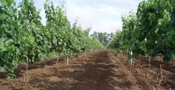 PD Mojmírovce vinohrady
